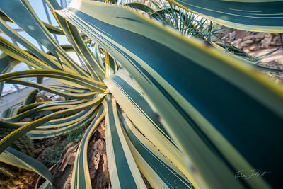 Phipps-Conservatory-and-Botanical-Gardens-2015-58