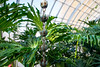 Phipps-Conservatory-and-Botanical-Gardens-2015-193