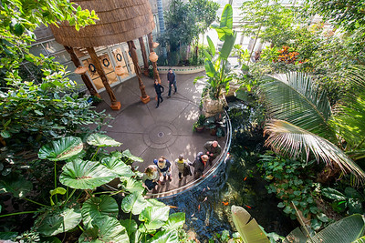 Phipps-Conservatory-and-Botanical-Gardens-2015-120