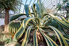 Phipps-Conservatory-and-Botanical-Gardens-2015-53