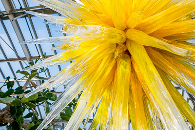Phipps-Conservatory-and-Botanical-Gardens-2015-44