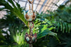 Phipps-Conservatory-and-Botanical-Gardens-2015-197