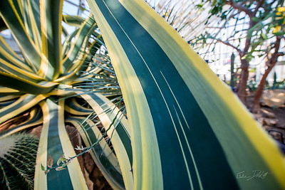 Phipps-Conservatory-and-Botanical-Gardens-2015-54