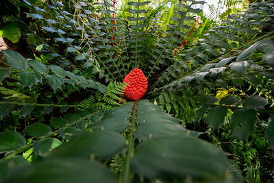 Phipps-Conservatory-and-Botanical-Gardens-2015-176