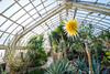 Phipps-Conservatory-and-Botanical-Gardens-2015-36