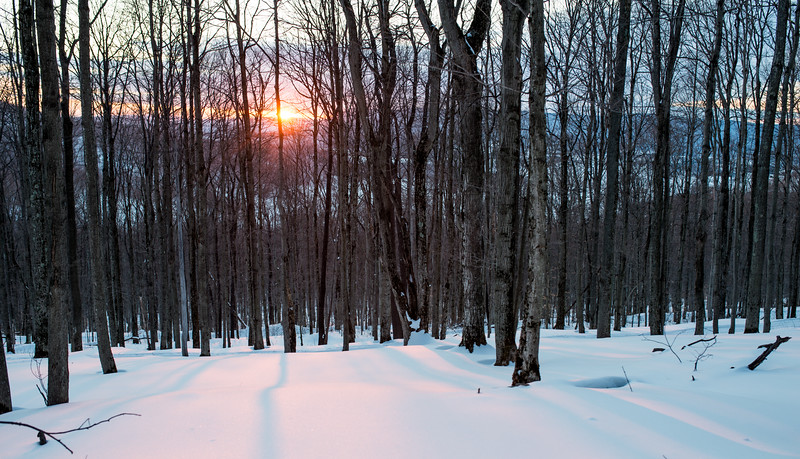 My Lad_Cross Country Skiing_White Grass_Canaan Valley_West Virginia_photo by Gabe DeWitt_February 28, 2015-250