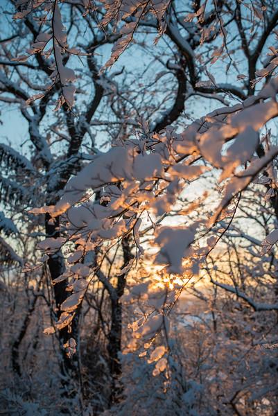 Snow Walk_Morgantown_West Virginia_photo by Gabe DeWitt_March 06, 2015-12