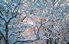 Snow Walk_Morgantown_West Virginia_photo by Gabe DeWitt_March 06, 2015-19