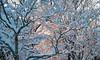 Snow Walk_Morgantown_West Virginia_photo by Gabe DeWitt_March 06, 2015-20