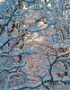 Snow Walk_Morgantown_West Virginia_photo by Gabe DeWitt_March 06, 2015-21-2