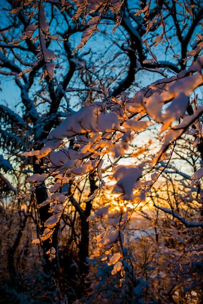 Snow Walk_Morgantown_West Virginia_photo by Gabe DeWitt_March 06, 2015-12-4