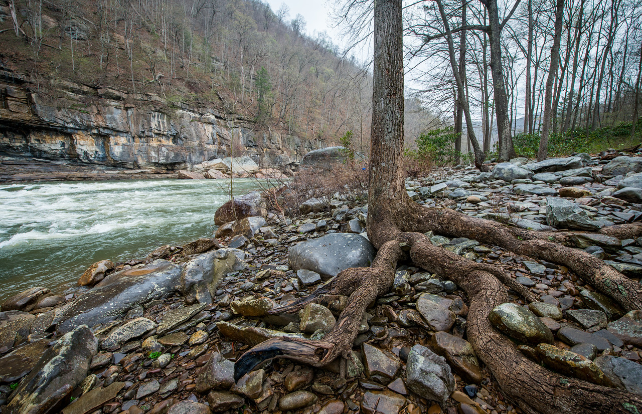 NCM15010; Allegheny Trail; Cheat River; DNR; Friends of the Cheat; Gabe DeWitt; TNC; The Nature Conservancy; The Nature Conservancy Magazine; West Virginia; photo by Gabe DeWitt; spring Views from the Allegheny trail. River side trees entangle the rocks with thier exposed roots.
