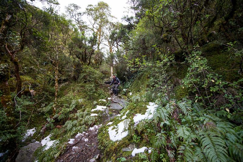 Matukituki_Valley_Mt_Aspiring_National_Park_Wanaka_New_Zealand_20150518_766