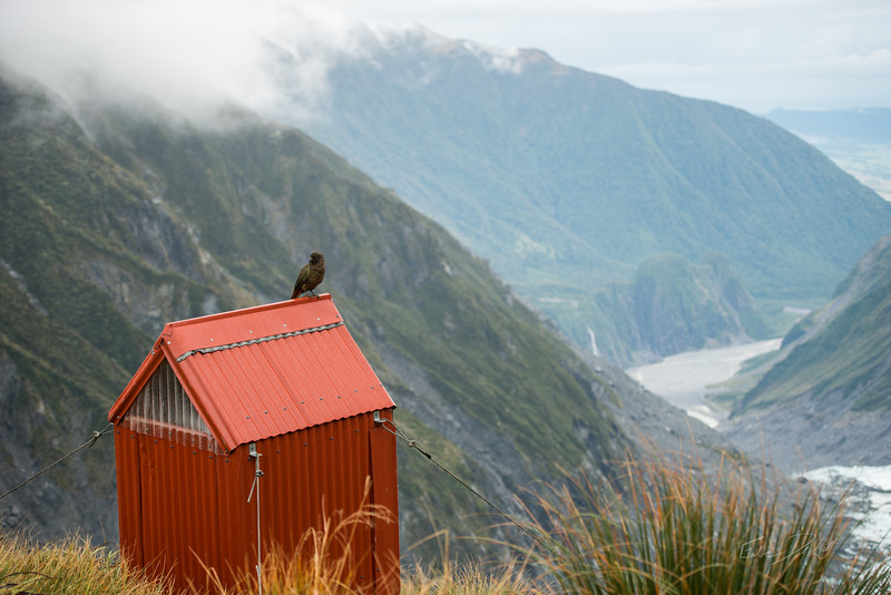 Fox_Glacier_Chancellor_Hut_New_Zealand_20150522_278