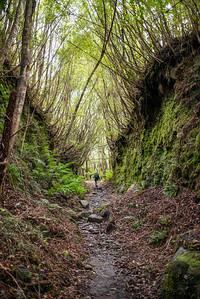 Cedar_Flat_Hut_Hokitika_New_Zealand_20150525_2