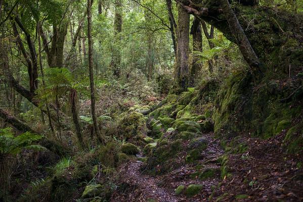 Cedar_Flat_Hut_Hokitika_New_Zealand_20150525_27