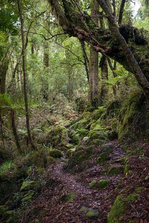 Cedar_Flat_Hut_Hokitika_New_Zealand_20150525_28