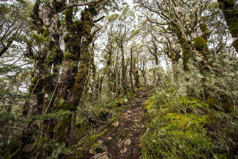 Avalanche_Peak_Arthurs_Pass_New_Zealand_20150508_19