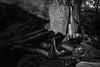 Dylan-Jones-Bouldering-Coopers-Rock-WV_August_25_2015_80