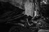 Dylan-Jones-Bouldering-Coopers-Rock-WV_August_25_2015_81
