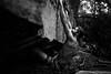 Dylan-Jones-Bouldering-Coopers-Rock-WV_August_25_2015_86
