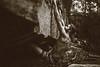 Dylan-Jones-Bouldering-Coopers-Rock-WV_August_25_2015_86-2