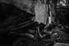 Dylan-Jones-Bouldering-Coopers-Rock-WV_August_25_2015_82