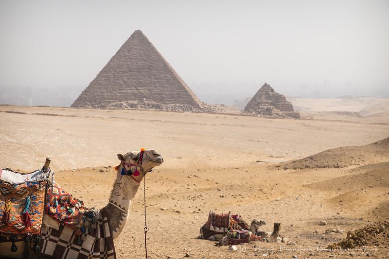 20150301_TripToEgypt_300