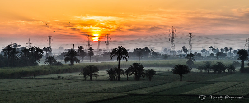 Luxor fields at dawn #1