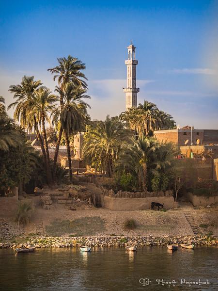 Nile #5
