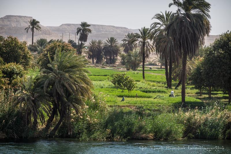 20150304_TripToEgypt_1739
