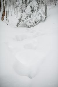 Canaan-Valley-WV-Winter-Storm-Jonas-66