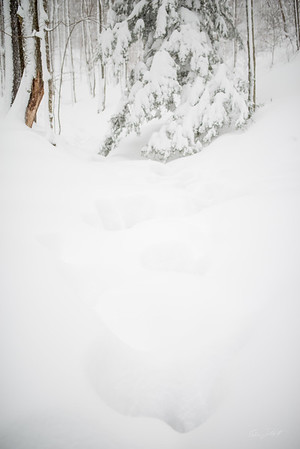 Canaan-Valley-WV-Winter-Storm-Jonas-65