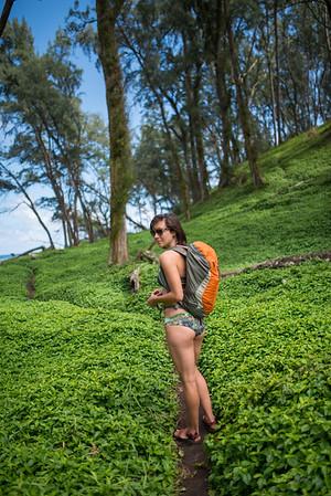 Pololu-Valley-Hawaii-82