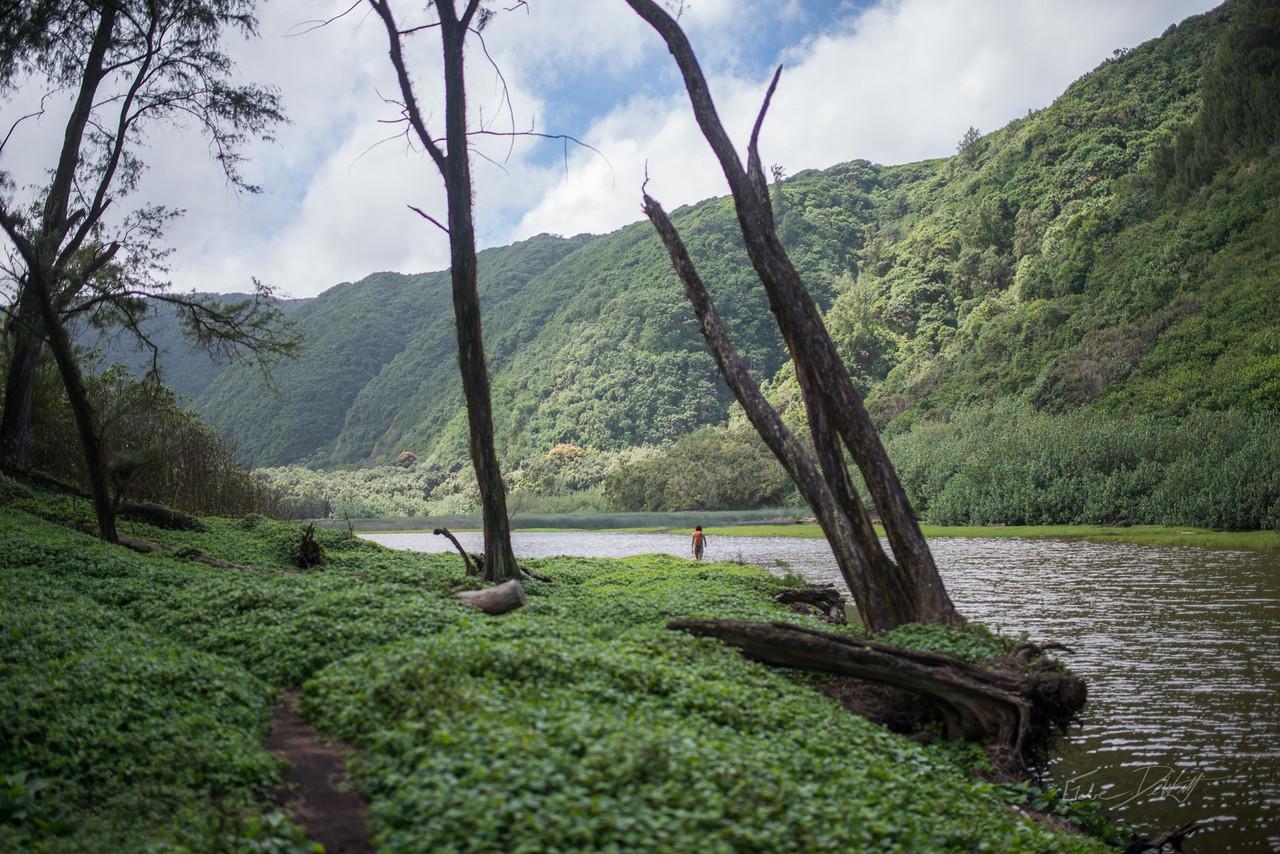 Pololu; Valley; Hawaii; Big Island; Black Sand; By Gabe DeWitt; HW; Jungle; Nikon; Nikon D800; Places; Pololu Valley; Travel; Winter in Hawaii; beach; island