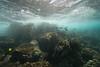 Two Step-Snorkeling-Hawaii-655