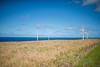 Wind-Farm-Hawaii-2