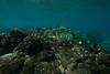 Two Step-Snorkeling-Hawaii-645