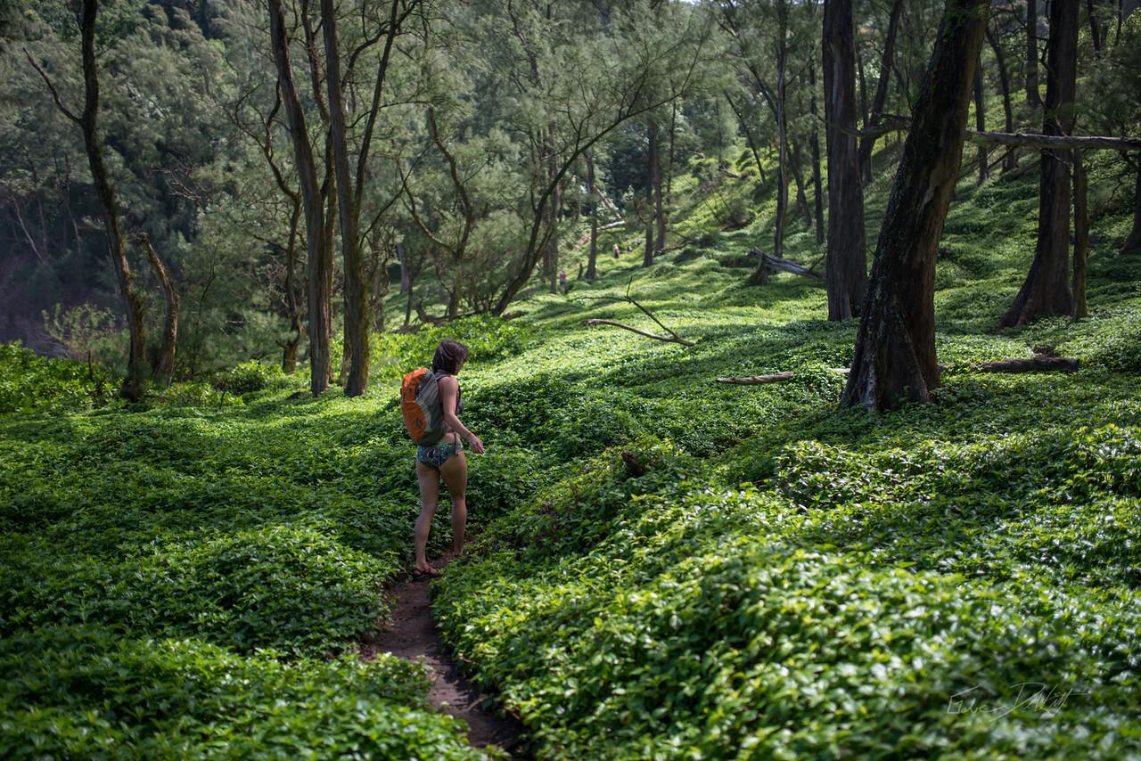 Pololu; Valley; Hawaii; 139; Big Island; Black Sand; By Gabe DeWitt; HW; Jungle; Nikon; Nikon D800; Places; Pololu Valley; Travel; Winter in Hawaii; beach; island