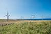 Wind-Farm-Hawaii-84