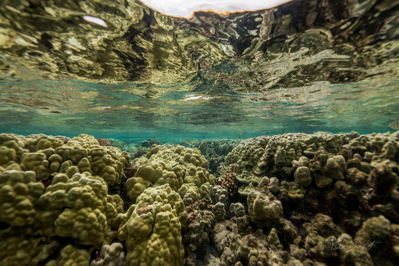 Kapoho; Tidepools; Pahoa; Hawaii; 290; Big Island; By Gabe DeWitt; Favorite things; HW; Kapoho Tidepools; Nikon; Nikon D800; Places; Travel; Underwater photography; Winter in Hawaii; island; outex; outex housing; snorkeling; underwater; underwater housing