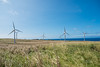 Wind-Farm-Hawaii-75