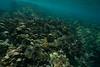 Two Step-Snorkeling-Hawaii-640