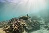 Two Step-Snorkeling-Hawaii-77