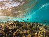 Two Step-Snorkeling-Hawaii-515