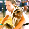 0811 fair animals 3