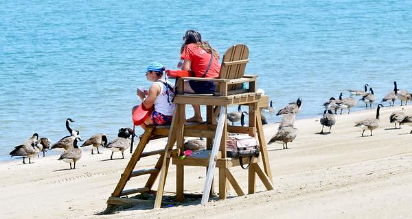 0719 geese beach