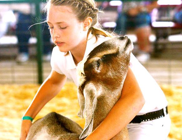 0811 fair animals 3