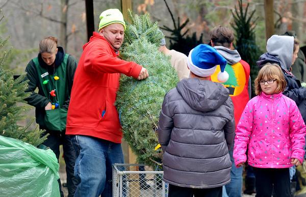 1203 christmas tree shopping 4