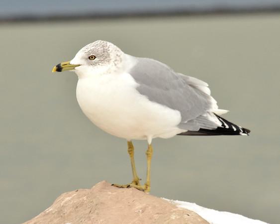 1212 seagull